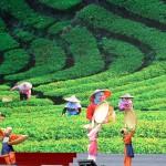 蒋介石総統率いる国民党の本格統治時代は農業に力を注いだ。台湾の新茶を摘むシーン