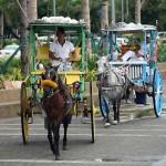 悪評高い観光客向けの馬車「カレッサ」。法外な料金を請求されることも多く注意が必要である