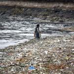 台風の影響で流れ着いた大量のゴミ