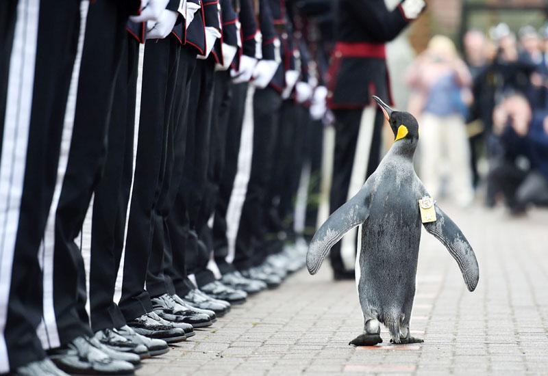 儀仗兵を閲兵する准将ペンギン「ニルス・オラフ」