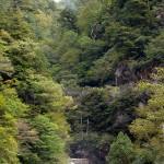 滝の上方に遊歩道が見える