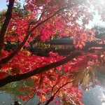 ウィ―ンの世田谷公園
