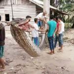 体長7メートル、住民が一丸でニシキヘビ退治