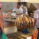 ヴェロペーゾ市場、アマゾン川で採れた様々な魚が並ぶ