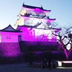 桜・梅・アジサイ・ショウブ、小田原城に花々投影