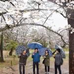 高知市で桜が満開、全国で統計史上最速