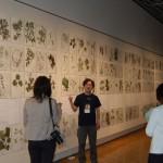 北海道博物館で「野幌森林公園いきもの図鑑」展