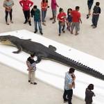 世界最大級のワニ「ロロン」の標本(レプリカ)