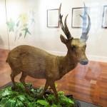 館内に展示されている動物の標本
