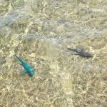 海は透き通っておりカラフルな魚が泳いでいるのが見える