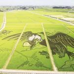 行田市の田んぼアート「稲穂の地上絵」が見頃