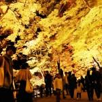 カエデが色づく「香嵐渓」でライトアップ