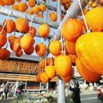 「ころ柿」づくり、まるでオレンジ色のカーテン