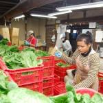 介護・農業の現場から高まる外国人材への期待