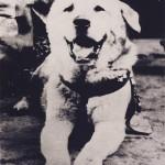 「笑顔」の忠犬ハチ公、新写真が見つかる