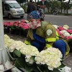 第2回米朝首脳会談の歓迎ムードを盛り上げるためにハノイ市内で花の準備をする女性