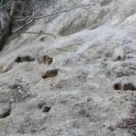 島の各所にうさぎの掘った穴があり、そこからうさぎが出てくることも