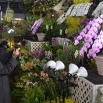 10万株の蘭が美の競演、「世界らん展」が開幕