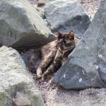立ち入り禁止となった砂浜でくつろぐ野良猫