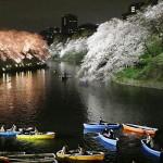 幻想的な夜桜、ライトアップ最終日を迎える