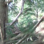 自然界で暮らすトキのペアからひなが誕生