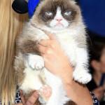「世界で最も不機嫌な猫」が静かに天国へ
