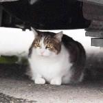 猫のラリー、米大統領専用車「野獣」を止める