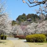 日本三名園の「偕楽園」、11月から有料化に