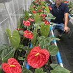 TOKYO急ピッチ1年前、咲くか震災復興の花