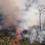 火災が続くアマゾンの熱帯雨林