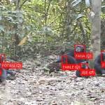 9割超正答、AIで野生チンパンジーの顔識別