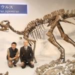 北海道で発見された「むかわ竜」新種に認定