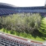 サッカースタジアムのピッチに森が出現