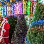 様々なクリスマスツリーを扱う店