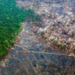 破壊されるアマゾン熱帯雨林