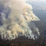 アマゾン熱帯雨林