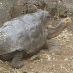 子孫800匹、ゾウガメ「ディエゴ」繁殖役退任へ
