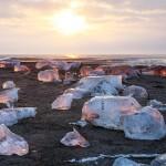 朝日を浴びて輝く、厳冬期に現れる海岸の宝石