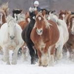 雪上のコースを3周、冬の恒例「馬追い運動」
