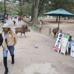 奈良県内で宿泊キャンセル1万500人に上がる