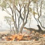 豪政府、森林火災被災地の復興を「手伝って」