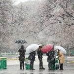 都心でも積雪1cm、自粛に雪、閑散の上野公園