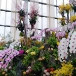 全面ガラス張り温室にランの巨大オブジェを展示