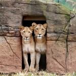 誰も居ませんね、新型コロナ拡大で動物園は閉鎖