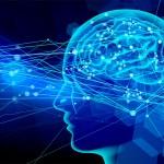 人体(脳神経)