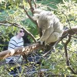 コアラとの再会、動物園に子供の笑顔が戻る