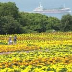 博多湾を彩るオレンジと黄色のじゅうたん