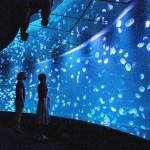 「海月空感」で1500匹のミズクラゲと一体感
