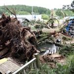 東海地方の大雨で倒れた樹齢1300年のご神木