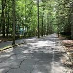 『新・日本街路樹100景』に選出された旧軽井沢のカラマツ並木、三笠通り(「ウィキペディア」から)